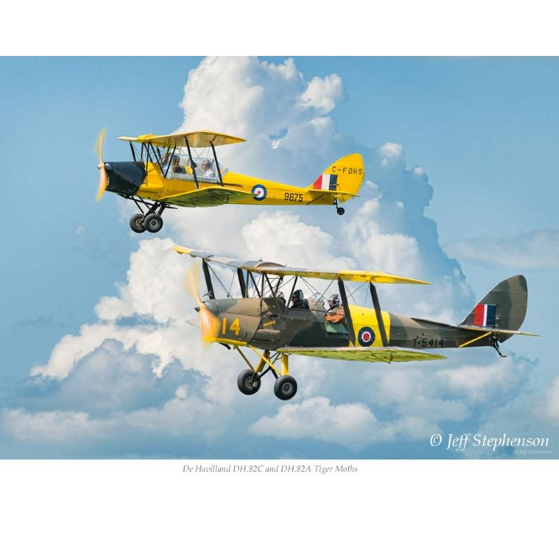 Product Photo of 25111 - Tiger Moths Print